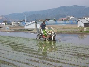 S160329西村さん田植え作業2