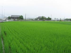 S160607西村さんの田んぼ