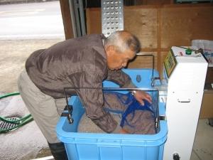 S170217つづいて浸種の準備で種モミを張り込む