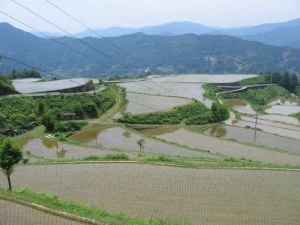 S170530田植えの終わった源流米の田んぼ2