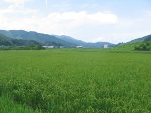 S170711福留さんの田んぼ