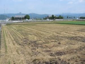 S170808西村コシの田んぼ