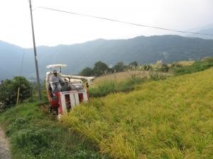 S171011式地さん稲刈り1