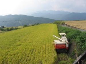 S171011式地さん稲刈り2