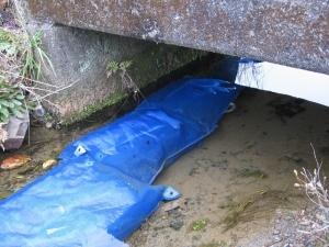 S180215小川に浸けれらた種籾