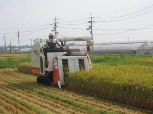 S180806村上コシ稲刈り2