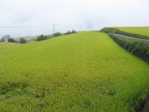 S181004式地さんの上の田んぼ
