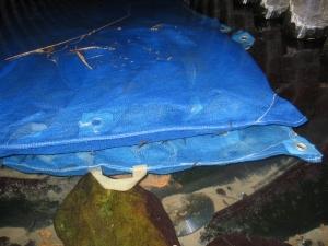 S190214ブルーの袋に種もみ入っている。エビもいる