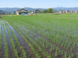 S200511西村田んぼ