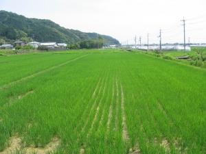S200608村上さんの田んぼ1