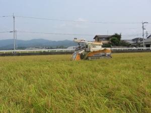 S200807岩原さん稲刈り2